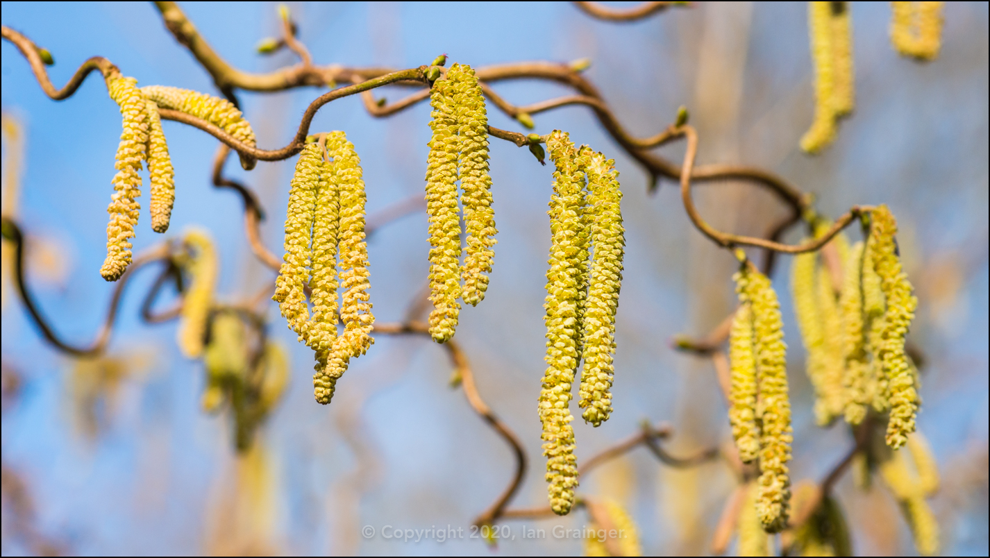 Counting Catkins