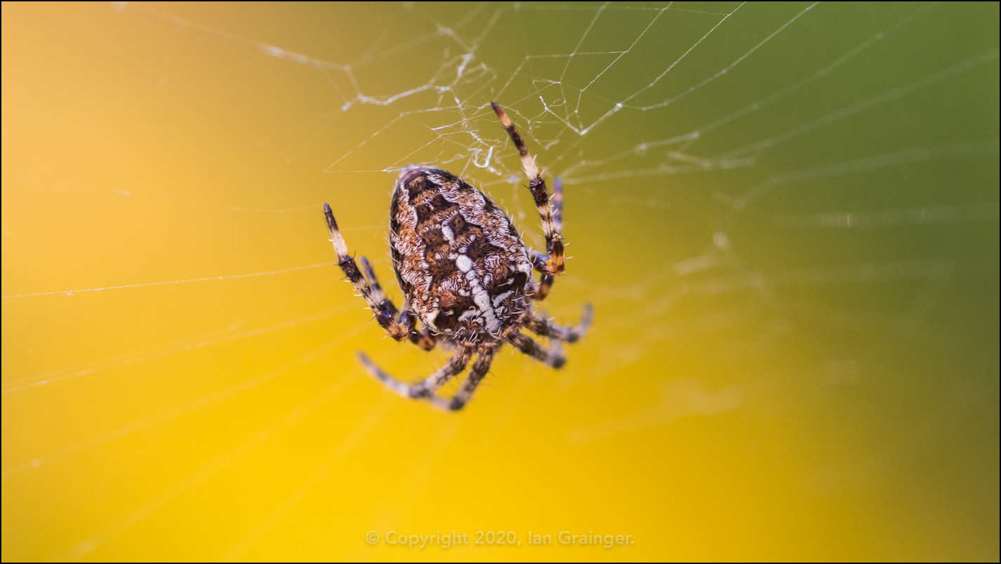 Cross Spider Detail